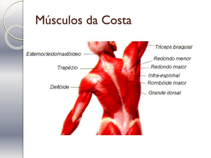 Músculos da Costa