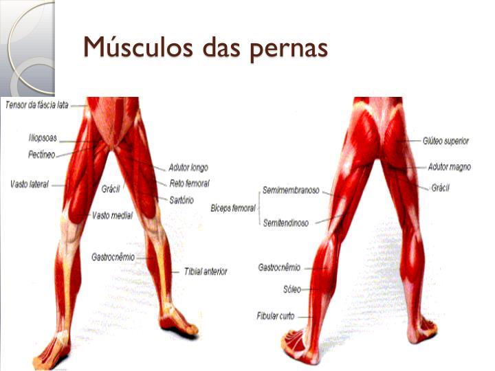 Músculos das pernas