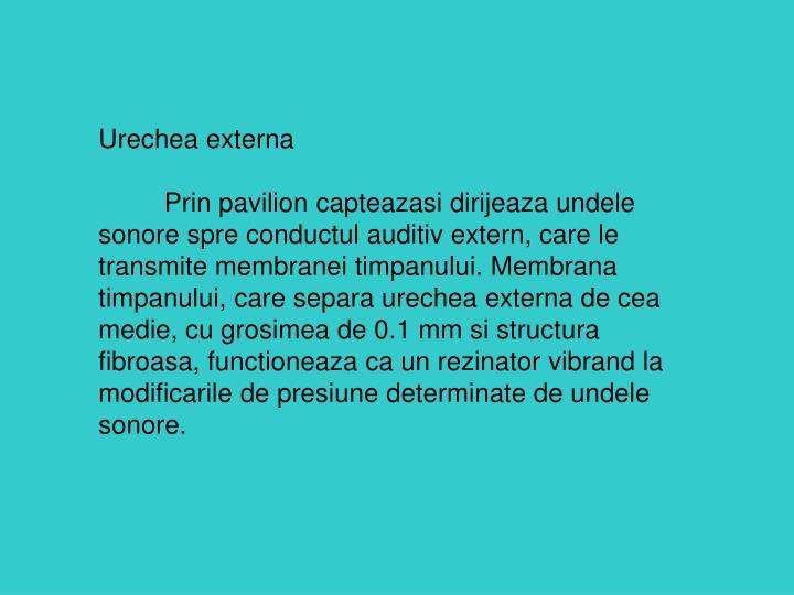 Urechea externa
