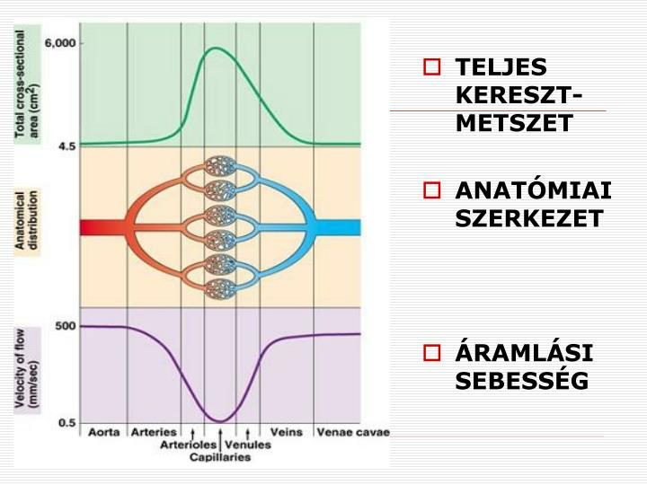 TELJES KERESZT-METSZET