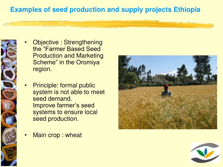 Examples of seed production and supply projects Ethiopia