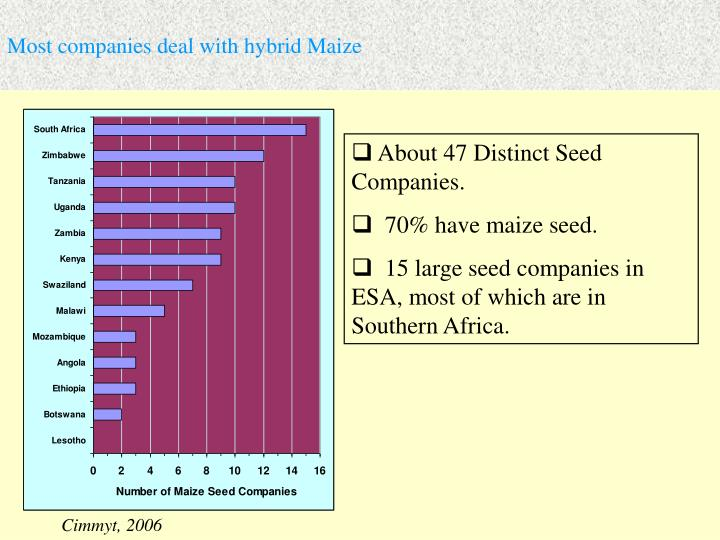 Most companies deal with hybrid Maize
