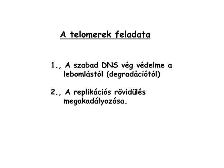 A telomerek feladata