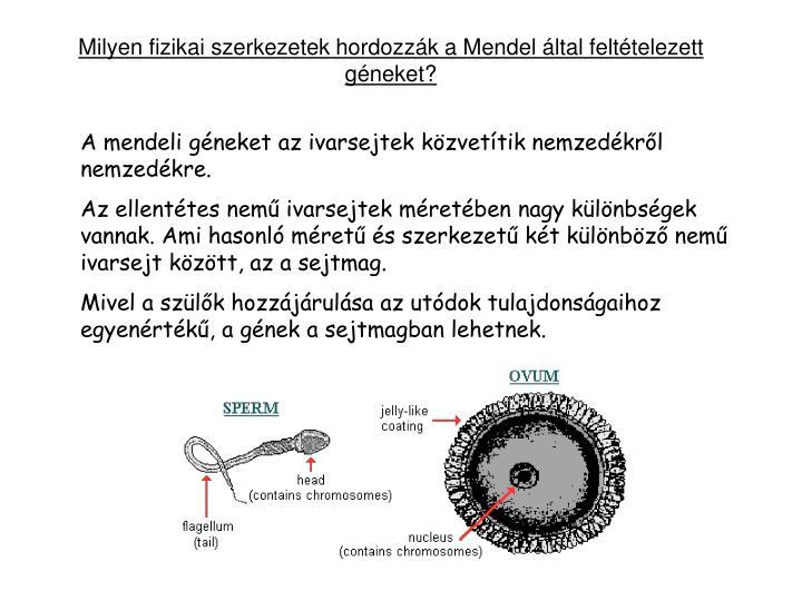 Milyen fizikai szerkezetek hordozzák a Mendel által feltételezett géneket?