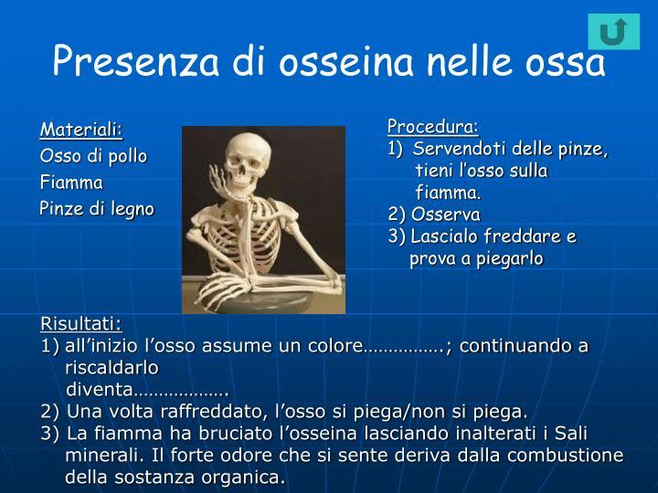 Presenza di osseina nelle ossa