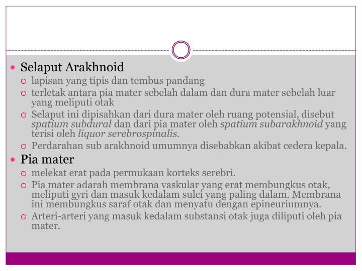 Selaput Arakhnoid