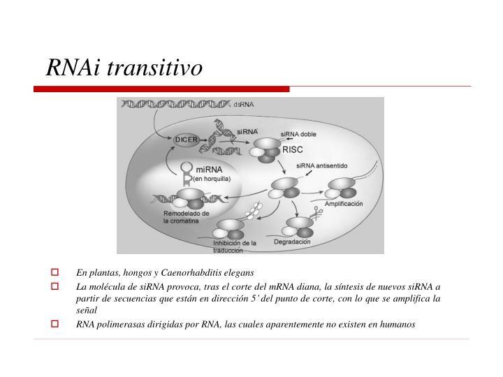 RNAi transitivo