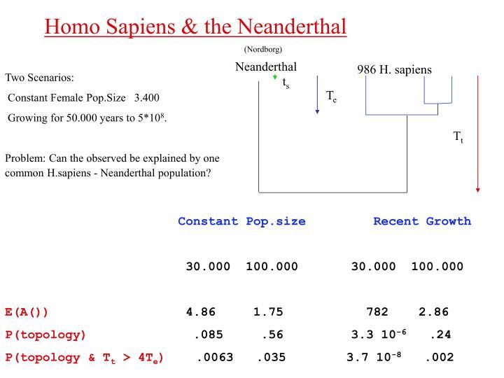 986 H. sapiens