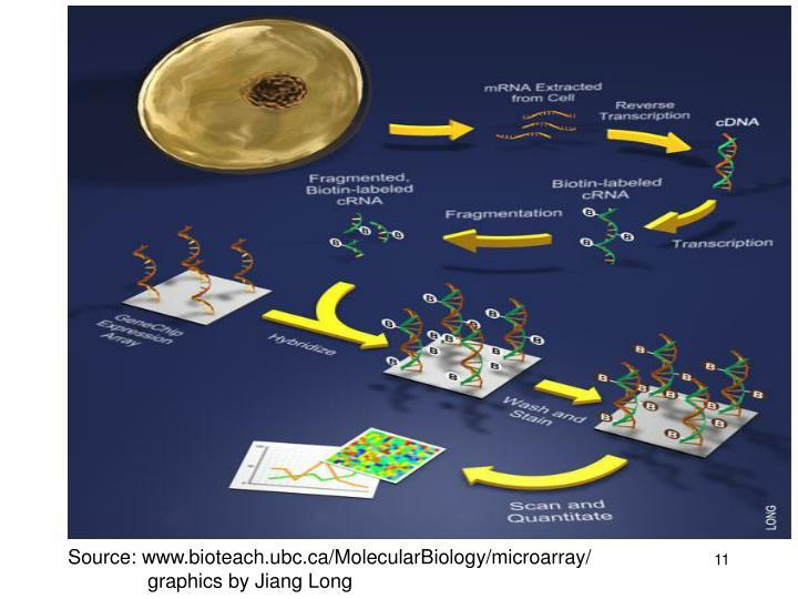 Source: www.bioteach.ubc.ca/MolecularBiology/microarray/