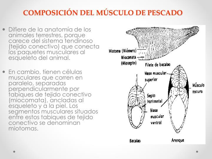 COMPOSICIÓN DEL MÚSCULO DE PESCADO