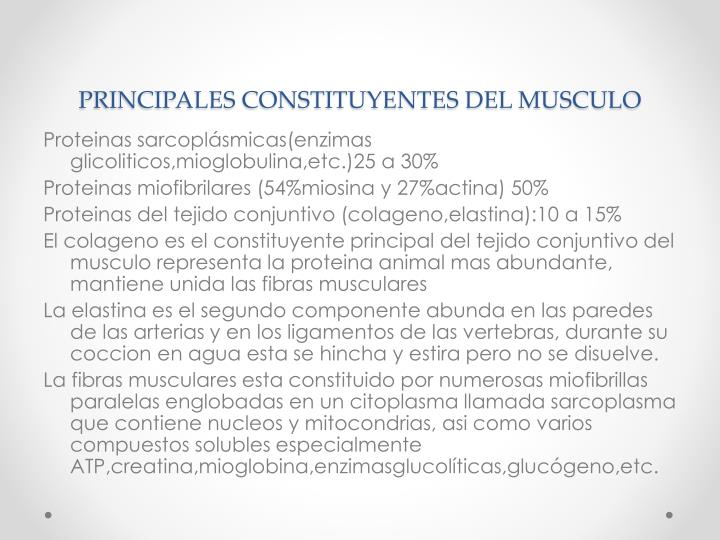 PRINCIPALES CONSTITUYENTES DEL MUSCULO