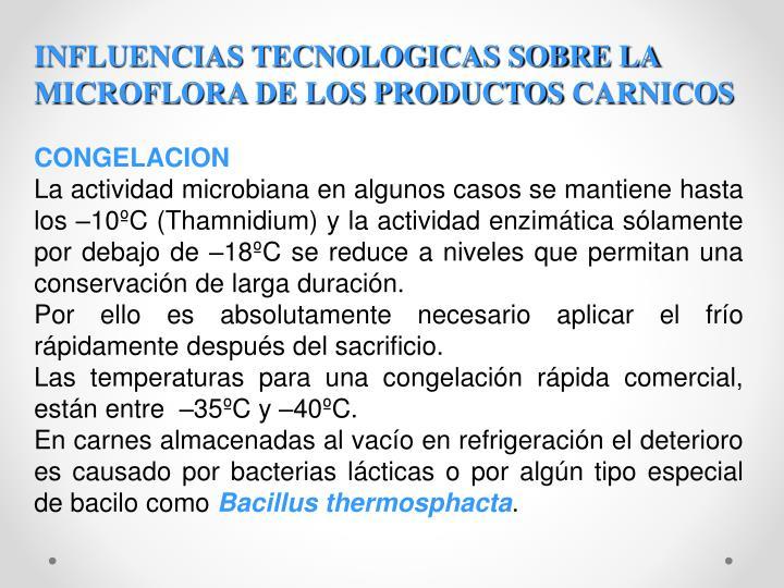 INFLUENCIAS TECNOLOGICAS SOBRE LA MICROFLORA DE LOS PRODUCTOS
