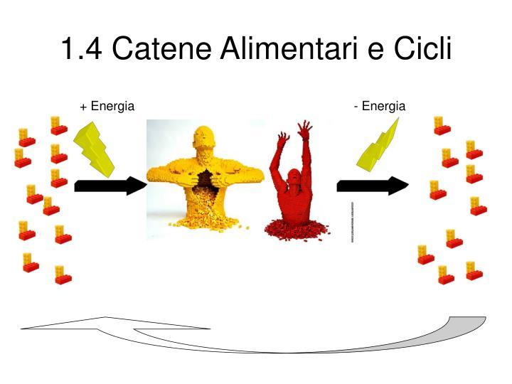 1.4 Catene Alimentari e Cicli