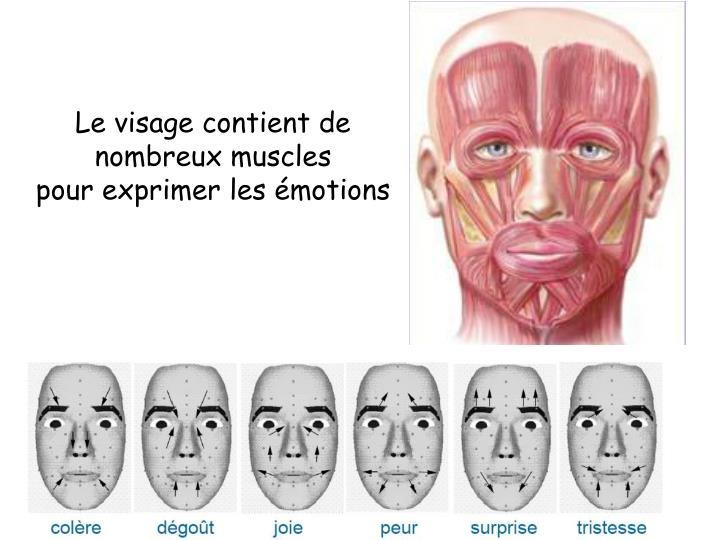 Le visage contient de nombreux muscles