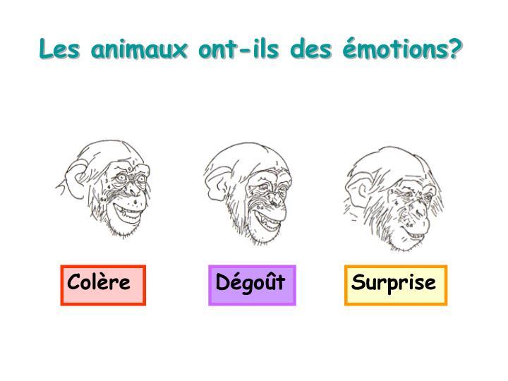 Les animaux ont-ils des émotions?