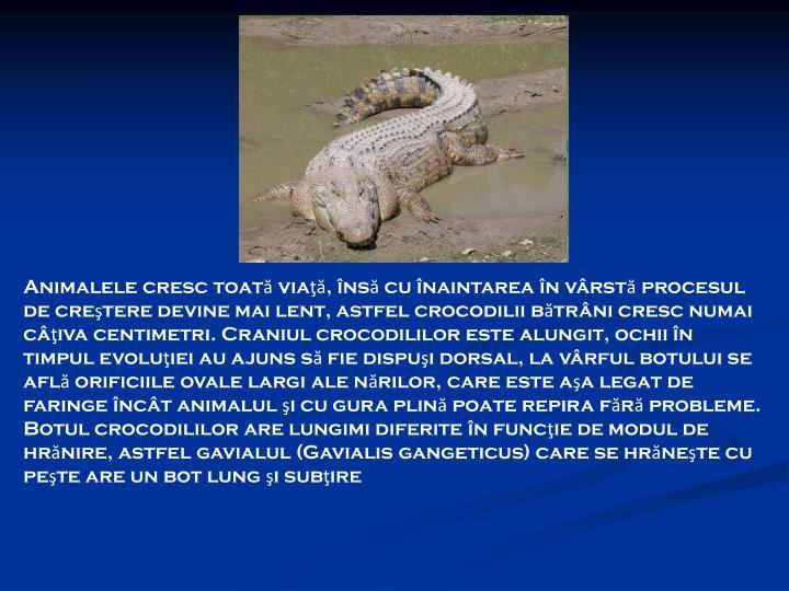 Animalele cresc toată viaţă, însă cu înaintarea în vârstă procesul de creştere devine mai lent, astfel crocodilii bătrâni cresc numai câţiva centimetri. Craniul crocodililor este alungit, ochii în timpul evoluţiei au ajuns să fie dispuşi dorsal, la vârful botului se află orificiile ovale largi ale nărilor, care este aşa legat de faringe încât animalul şi cu gura plină poate repira fără probleme. Botul crocodililor are lungimi diferite în funcţie de modul de hrănire, astfel gavialul (Gavialis gangeticus) care se hrăneşte cu peşte are un bot lung şi subţire