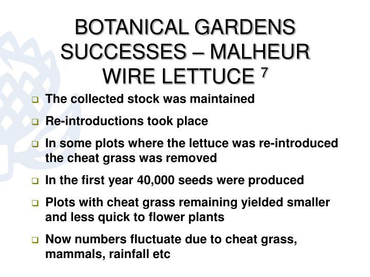 BOTANICAL GARDENS SUCCESSES – MALHEUR WIRE LETTUCE