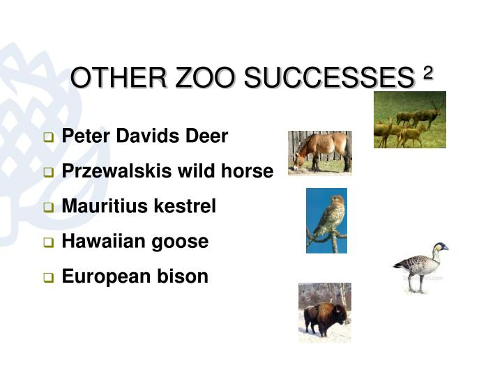 OTHER ZOO SUCCESSES