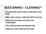 seed banks cleaning 8