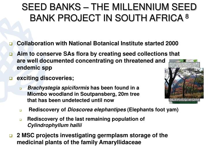 SEED BANKS – THE MILLENNIUM SEED BANK PROJECT IN SOUTH AFRICA