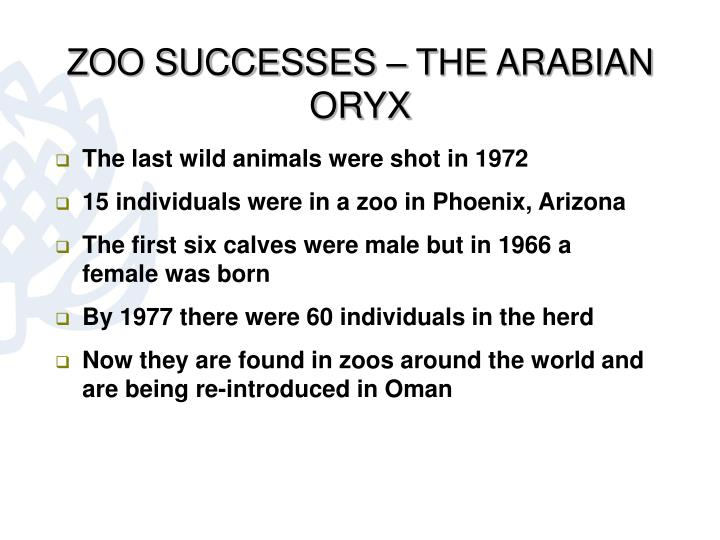 ZOO SUCCESSES – THE ARABIAN ORYX