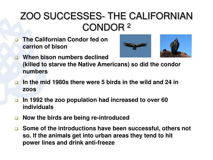 ZOO SUCCESSES- THE CALIFORNIAN CONDOR
