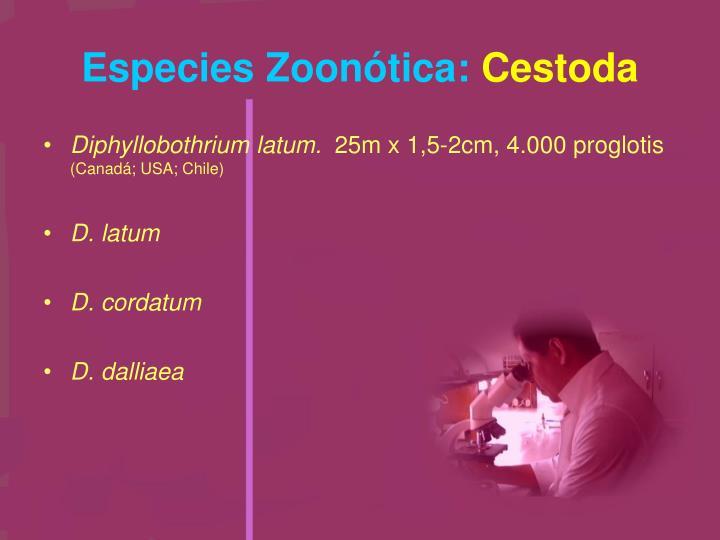 Especies Zoonótica: