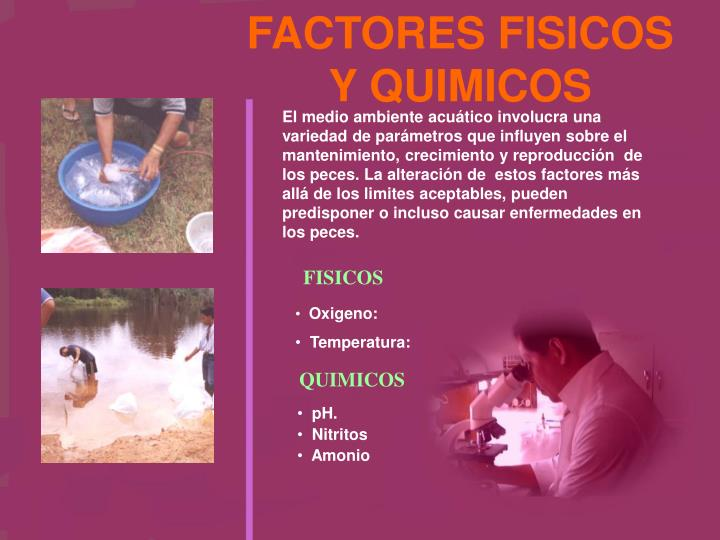 FACTORES FISICOS Y QUIMICOS
