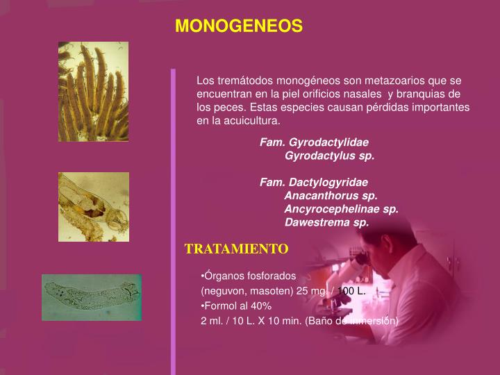 MONOGENEOS