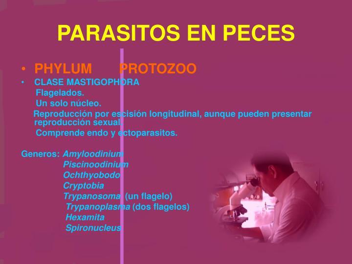 PARASITOS EN PECES
