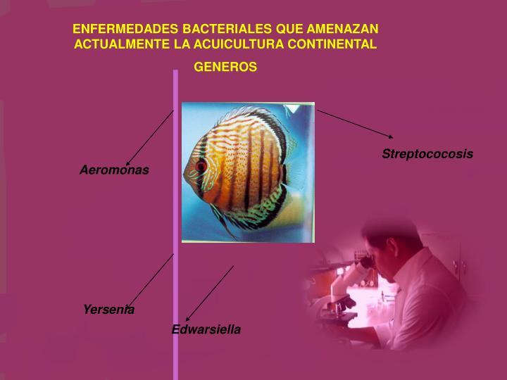 ENFERMEDADES BACTERIALES QUE AMENAZAN ACTUALMENTE LA ACUICULTURA CONTINENTAL