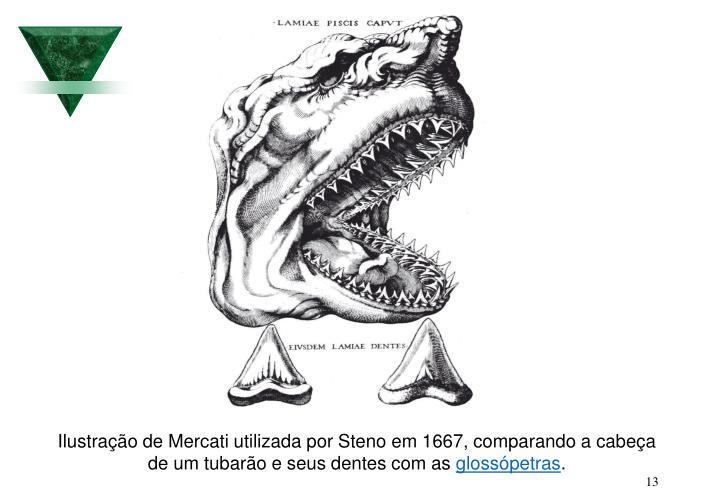 Ilustração de Mercati utilizada por Steno em 1667, comparando a cabeça de um tubarão e seus dentes com as