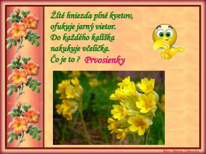 Žlté hniezda plné kvetov,