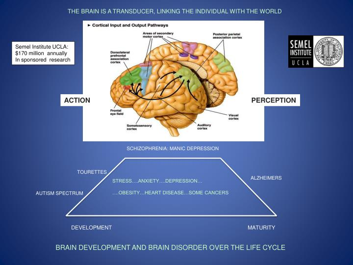 THE BRAIN IS A TRANSDUCER, LINKING THE INDIVIDUAL WITH THE WORLD