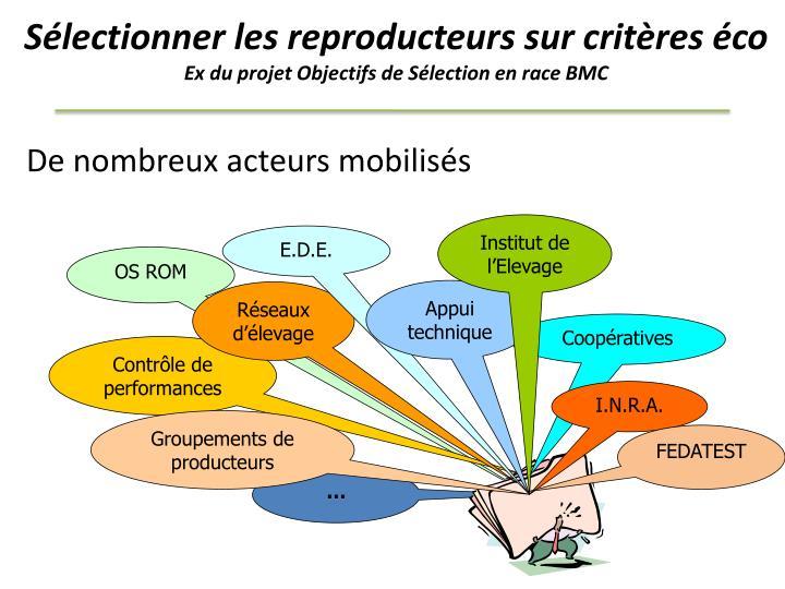Sélectionner les reproducteurs sur critères éco