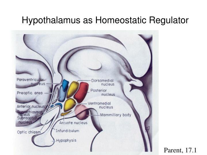 Hypothalamus as Homeostatic Regulator