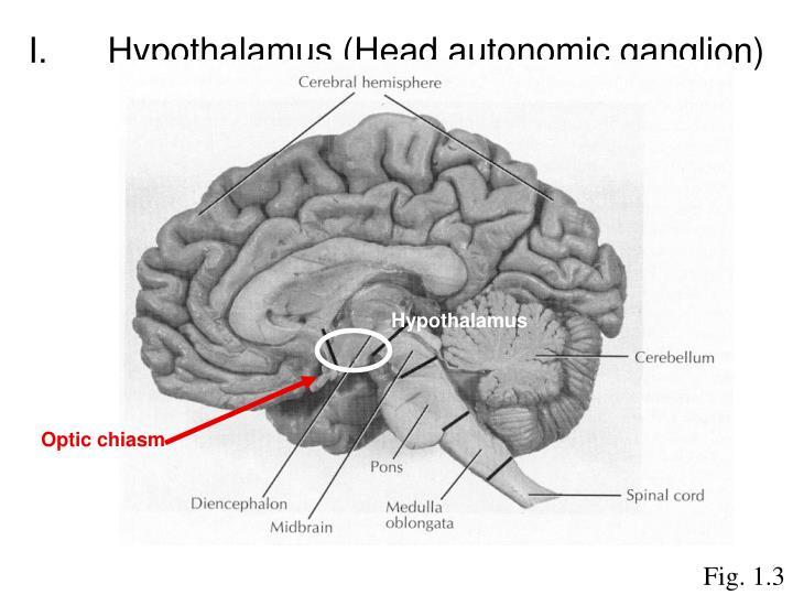 I.Hypothalamus (Head autonomic ganglion)