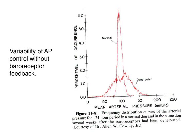 Variability of AP control without baroreceptor feedback.