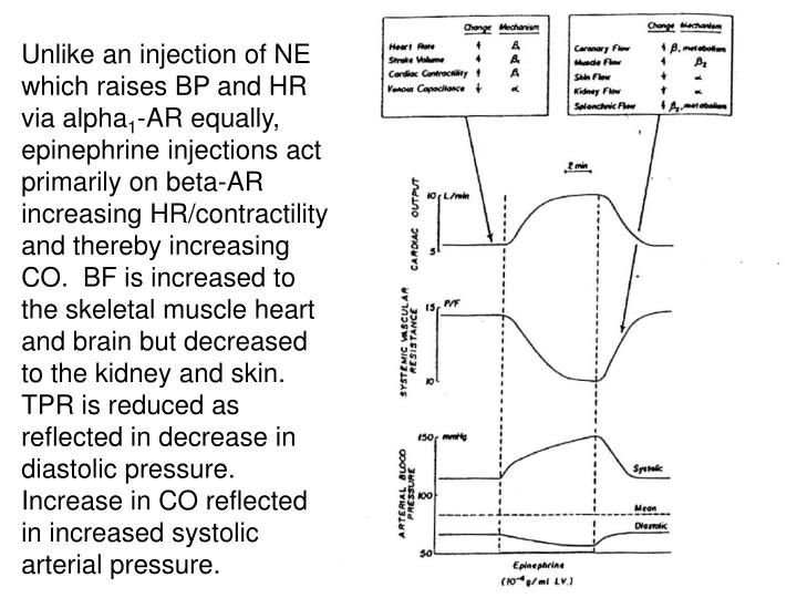Unlike an injection of NE which raises BP and HR via alpha