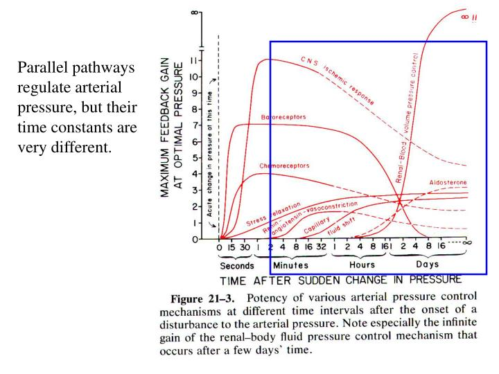Parallel pathways regulate arterial pressure, but their time constants are very different.