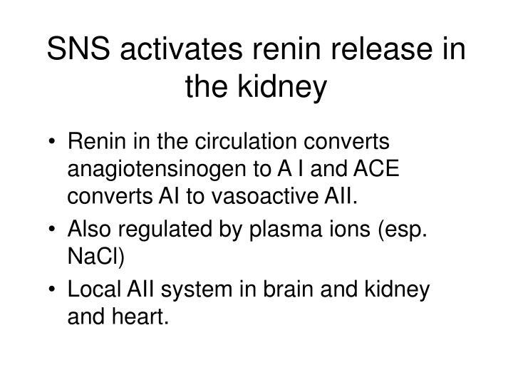 SNS activates renin release in the kidney