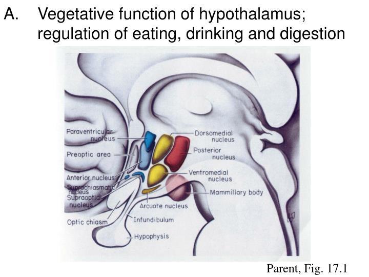 Vegetative function of hypothalamus;