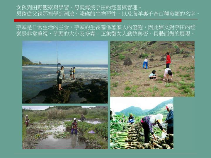 女孩到田野觀察與學習,母親傳授芋田的經營與管理。