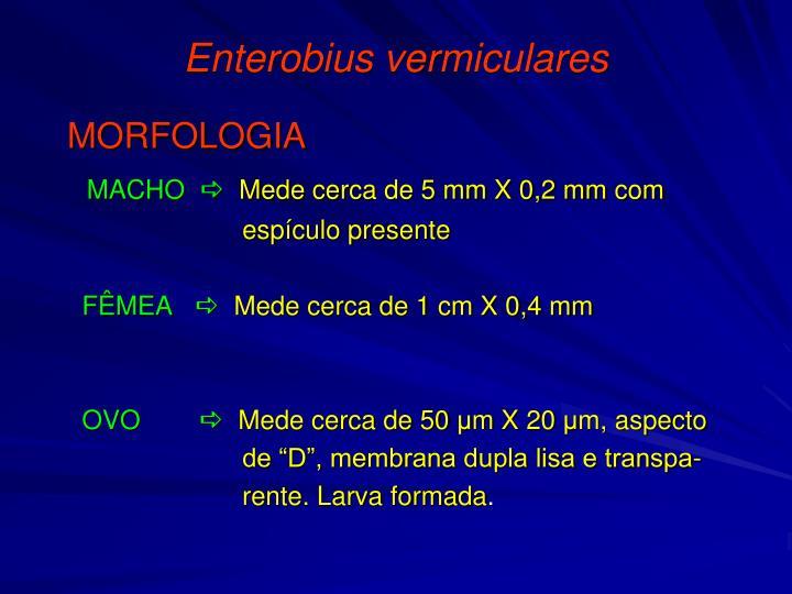 Enterobius vermiculares