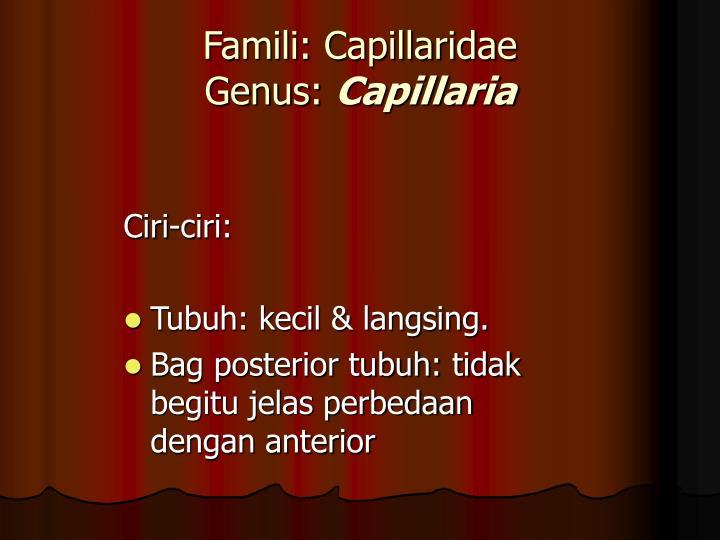 Famili: Capillaridae