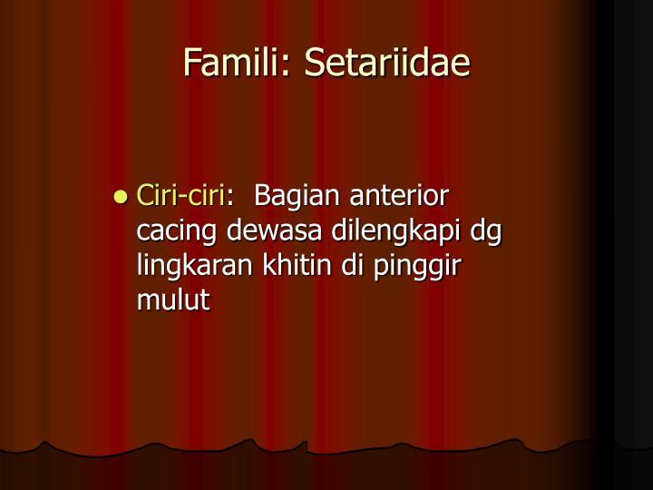 Famili: Setariidae