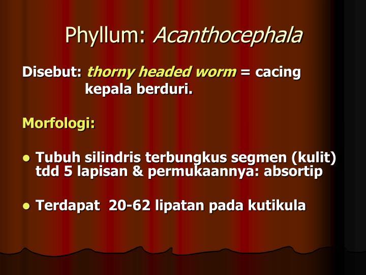 Phyllum: