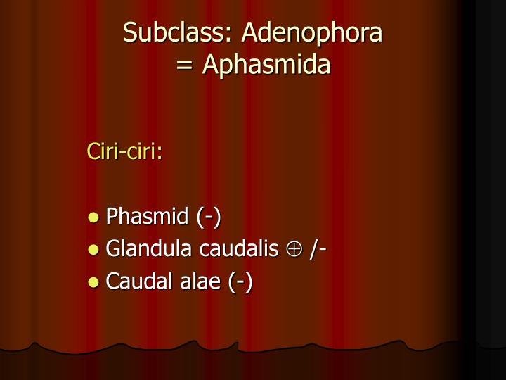 Subclass: Adenophora