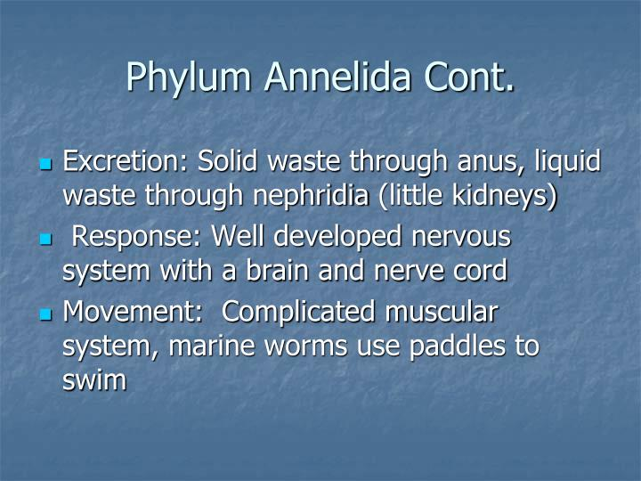Phylum Annelida Cont.