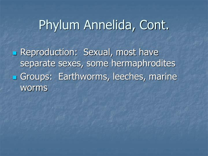 Phylum Annelida, Cont.